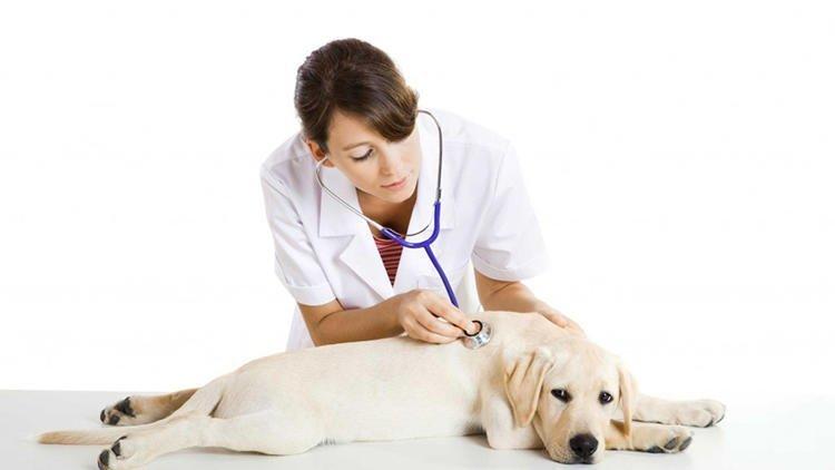 Çağatay Veteriner Kliniği