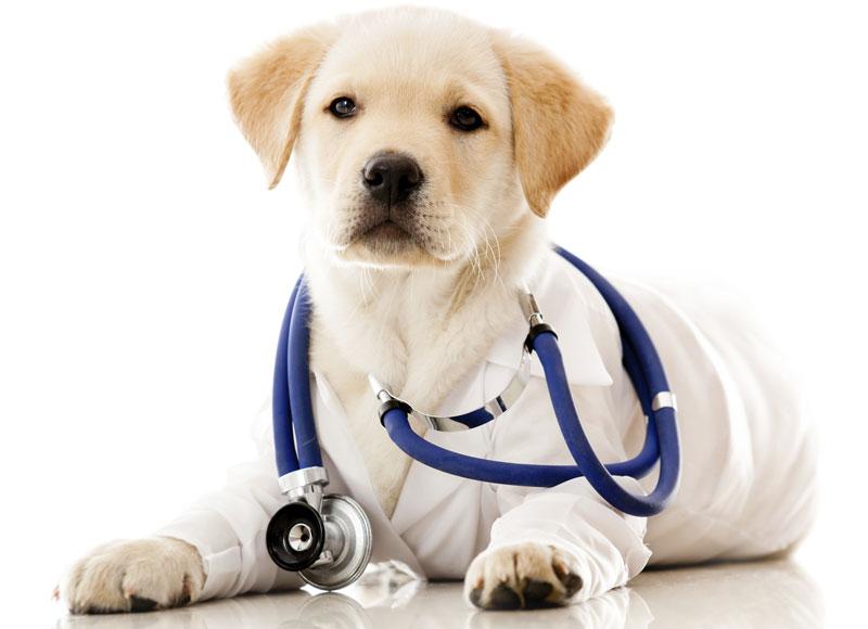 Genek Veteriner Kliniği