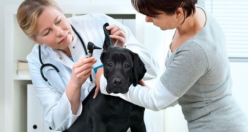 Petopya Veteriner Kliniği